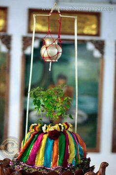 tulsi maharani Diy Diwali Decorations, Festival Decorations, Flower Decorations, Eco Friendly Ganpati Decoration, Ganpati Decoration At Home, Tulasi Plant, Plant Decor, Tulsi Vivah, Janmashtami Decoration
