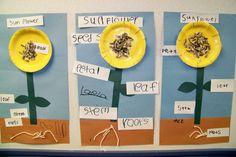 Parts of a Flower from Growing in Pre K - Modern Design 1st Grade Science, Kindergarten Science, Teaching Science, Science For Kids, Science Activities, Science Crafts, Science Ideas, Parts Of A Flower, Parts Of A Plant