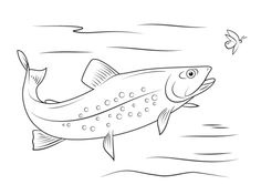 fish aquarium decorations coloring pages | Rainbow Trout Image to Color 3 Trout Coloring Page with ...