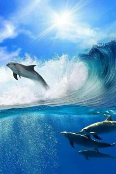 Beautiful Dolphins Riding The Waves!