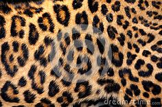 Real Leopard Skin - Download From Over 58 Million High Quality Stock Photos, Images, Vectors. Sign up for FREE today. Image: 42046795