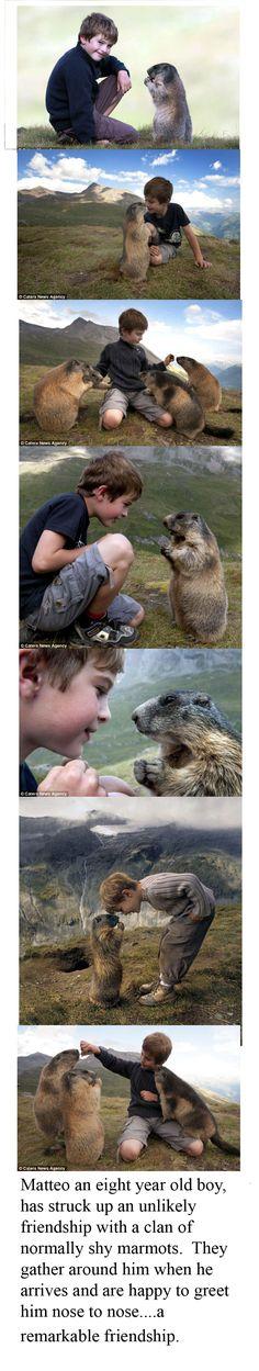 Friendly marmot family