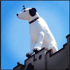 Giant-size Nipper, the RCA dog, guards Albany NY from atop a downtown warehouse.