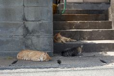 Fukuoka Cat Island, Japan