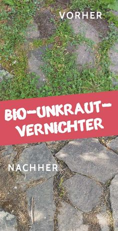 Bio Unkrautvernichter The post Bio Unkrautvernichter appeared first on Pinova - Gardening Gravel Garden, Garden Soil, Garden Plants, Garden Fencing, Vegetable Garden, Backyard Garden Design, Small Garden Design, Pool Garden, Amazing Gardens