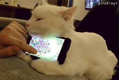 A Drowsy White Kitten Makes for an Adorably Unique and Effective iPhone Stand | Other phone options: http://www.sfbags.com/collections/iphone-cases