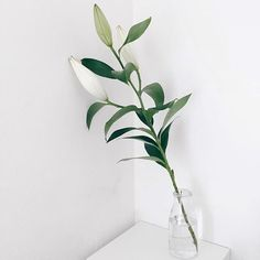Trees To Plant, Plant Leaves, Plants Are Friends, White Aesthetic, Flower Aesthetic, Tropical Vibes, Types Of Plants, Ikebana, Flower Decorations
