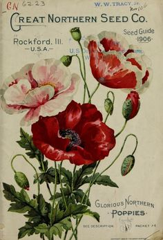 """Glorious Northern Poppies"" - The Great Northern Seed Company Seed Guide 1906"