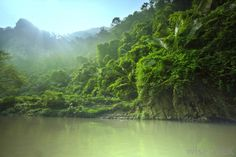 What is the Difference Between the Jungle and the Rainforest?