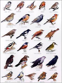 bird chart #birdhouses