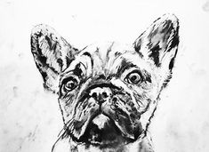 Colorful Dog art prints and Custom dog paintings by OjsDogPaintings Animal Paintings, Animal Drawings, Drawing Animals, French Bulldog Drawing, Black And White Dog, Custom Dog Portraits, Gifts For Dog Owners, Dog Signs, Halloween