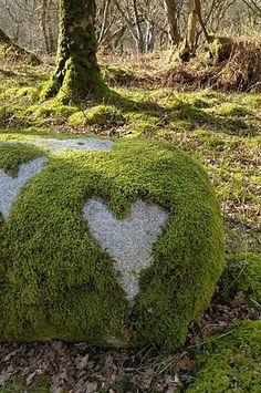 Love Heart shape in moss on granite bolder, United Kingdom, Europe I Love Heart, With All My Heart, Happy Heart, Heart In Nature, Heart Art, Heart Images, Fire Heart, Love Symbols, In A Heartbeat