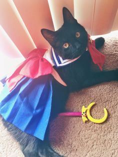 """""""Nova in her Halloween custom. She's a domestic short hair all black kitty, we adopted her in August she's about 7 months old now and she's a precious mischievous bundle of joy!..."""""""