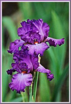 purple by tthealer