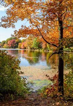 L'image contient peut-être: arbre, plante, ciel, plein air, nature et eau