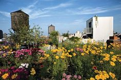 Rooftop garden from goode green- beautiful and clever! Greener and more interesting than moving to suburbia!