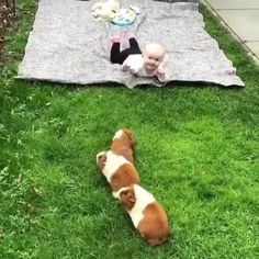 How cute is it? - Furry Ones - Adorable Animals Happy Animals, Cute Funny Animals, Cute Baby Animals, Funny Cute, Animals And Pets, Cute Animal Videos, Funny Animal Pictures, Little Babies, Cute Babies