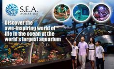 S$42.90 - First Time in Singapore:Brand New Marine Life Park S.E.A. Aquarium™ at RWS Singapore Cable Car Tour combo $5 Value F