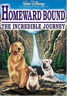 Homeward Bound --- Loved these movies!! Pretty sure I mad my sister mad all the time bc I would choose to watch one if these so often haha