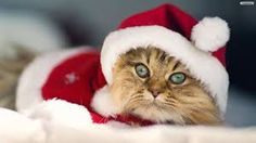 christmas cats - Cerca con Google