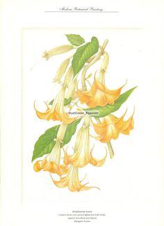 Botanical Art Book Plate of Brugmansia Aurea DustCoverPaperati, $6.00