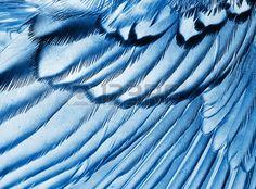 fond plumage de l oiseau gros plan l effet X ray Banque d'images