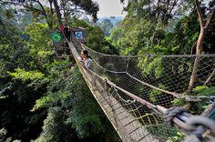 Wisatawan asal Korea menyeberang di Canopy Bridge (jembatan gantung antar pohon) di Kawasan Wisata Bukit Bangkirai, Balikpapan, Kaltim, Rabu (20/8). Kawasan wisata alam tersebut bertipe hutan hujan tropis dengan fasilitas Canopy Bridge (jembatan gantung antar pohon) dengan panjang 64 meter dengan ketinggian 30 meter ditopang dengan pohon kayu Bengkirai (Shorea Laevis). ANTARA FOTO/Yudhi Mahatma/pd/14