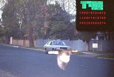 Un conductor con exceso de velocidad tiene suerte de que este pájaro le de una ayudita.   30 Fotos increíbles que pasan solamente una vez en la vida