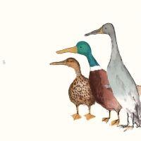 'Susan, Mark and Gulliver' sketchbook image by Catherine Rayner
