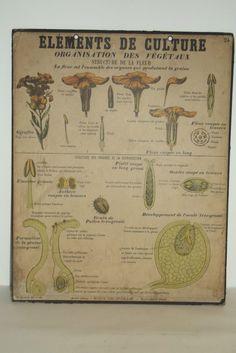 ancienne affiche scolaire anatomie corps humain loft art deco medecine 1960 divers. Black Bedroom Furniture Sets. Home Design Ideas
