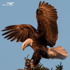 Gorgeous Eagle!!