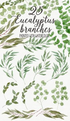 25 Eucalyptus Branches by Helga Wigandt on @creativemarket