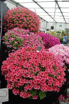 RHS Flower Show Birmingham