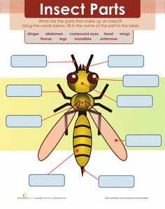 Worksheets: Insect Body Parts