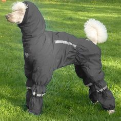 Poodle wearing the Ultimate Norway Rain/snow Suit. Dog Booties, Dog Clothes Patterns, Dog Jacket, Dog Wear, Dog Sweaters, Pet Clothes, Dog Clothing, Dog Dresses, Dog Coats