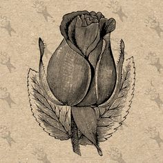 Vintage image retro drawing black and white Rose Flower Bud Instant Download Digital printable clipart graphic transfers prints etc HQ300dpi by UnoPrint on Etsy