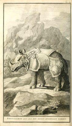 Rhinoceros illustration from Naaukeurige en uitvoerige beschryving van kaap de Goede Hoopby Peter Kolbe, 1727