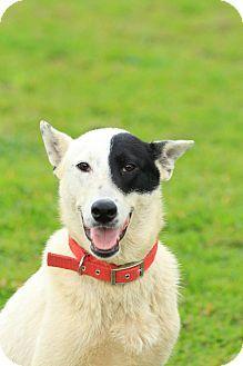 Sunnyvale, CA - Shepherd (Unknown Type) Mix. Meet Todd, a dog for adoption. http://www.adoptapet.com/pet/12880132-sunnyvale-california-shepherd-unknown-type-mix