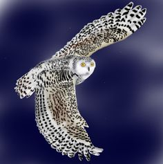 her passion peaks *** winter owl soaring higher *** love's first breath taken ***^SAB