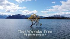 """Be More Outdoor 🌲 on Instagram: """"Sit back, relax and enjoy the beautiful view of #thatwanakatree 🌳 * * * Film by 🎬 📸 @mauritssimons + @bemoreoutdoor Music by:…"""" Sit Back, Relax, Mountains, Film, Music, Nature, Inspiration, Travel, Outdoor"""