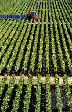 Far Niente Wine Estate, Napa Valley, CA