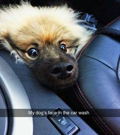 Hundreds of Funny and Adorable Dog Pictures, Dog Memes and yes Dog Shaming! It ends up that Man's Best Friend is as funny as they are loyal! Animal Jokes, Funny Animal Memes, Funny Animal Pictures, Cute Funny Animals, Cute Baby Animals, Funny Cute, Dog Pictures, Funny Dogs, Funny Humor