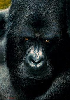 stock photo gorilla