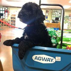#AgwayTopDog #finalist #dogsofinstagram