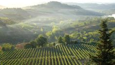 Italy's Vineyards: Home to some of the world's finest wines