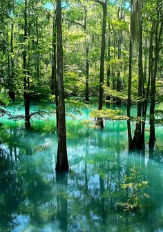 Radium Springs; Albany, GA--such a mythical-looking place. The water glows blue because of radium's radioactivity!