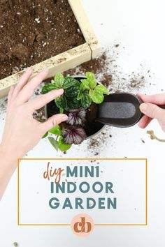 Up your indoor gardening game by DIYing your very own mini indoor garden. Mix different colors, leaf shapes, and textures to create a mini garden that pops in your home! Plant Crafts, Plant Projects, Diy Garden Projects, Water Plants, Cool Plants, Indoor Gardening, Container Gardening, House Plant Care
