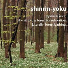 Shinrin yoku... A visit to the forest for relaxation: Forest Bathing