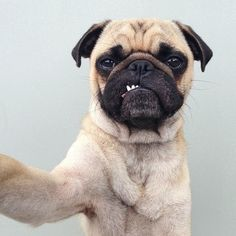 Selfie//