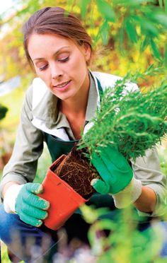 Tieto bylinky si môžete pokojne vypestovať aj doma v záhrade, na okne či balkóne. Nie je to vôbec zložité.